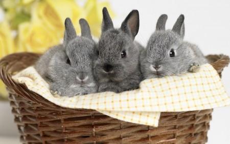 صور ارانب جميلة (1)