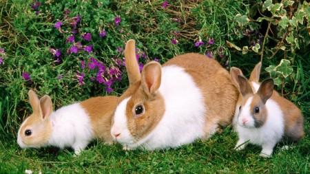 صور ارانب جميلة (2)