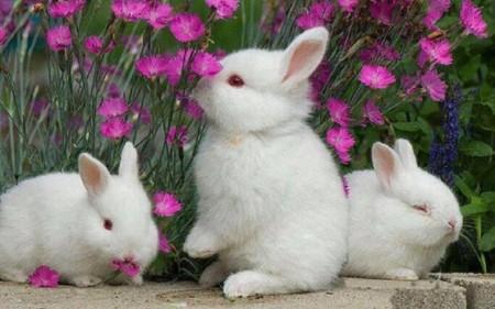 صور ارانب جميلة (3)