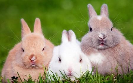 صور ارانب حلوه (1)