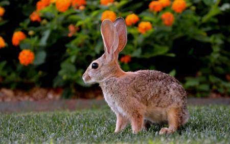 صور ارانب حلوه (3)