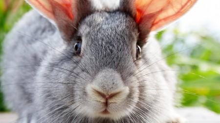 صور ارانب خلفيات (2)