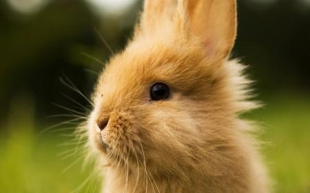 صور ارانب صغار (1)