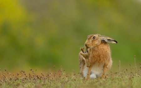 صور ارانب صغار (2)