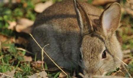 صور ارانب صغار (4)