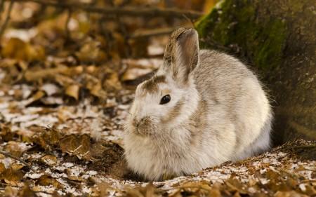 صور ارانب صغار (7)