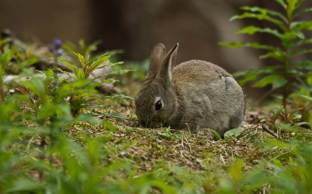 صور ارانب صغار (9)