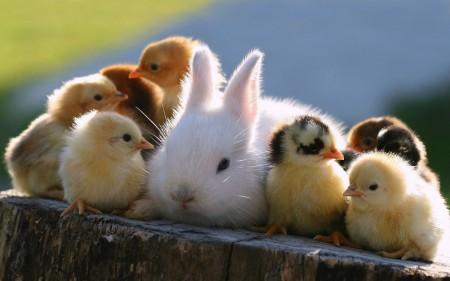 صور ارانب صغيرة (1)