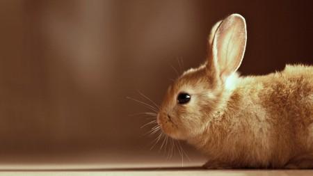 صور ارانب صغيرة (2)