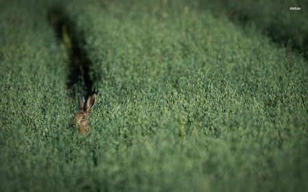 صور ارانب ملونة (1)