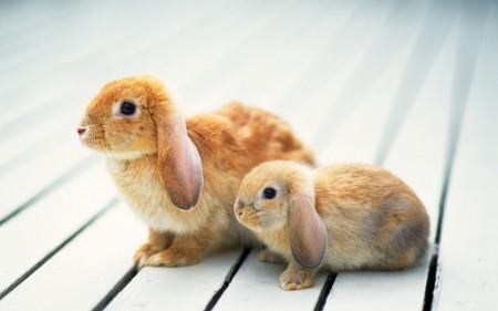 صور ارانب ملونة (2)