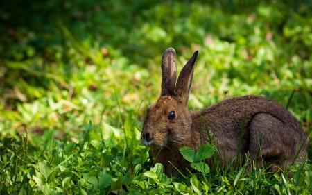 صور ارانب (2)