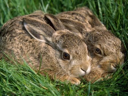 صور ارانب (3)