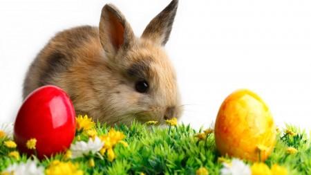 صور ارانب (4)