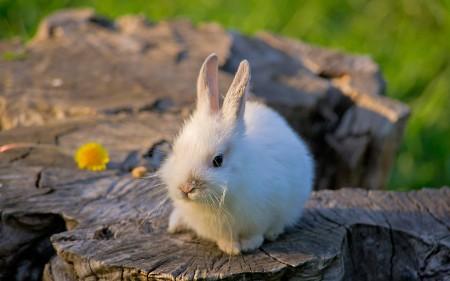 صور ارانب (5)