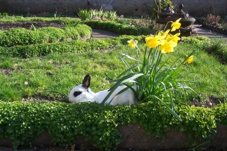 صور ارنب (2)
