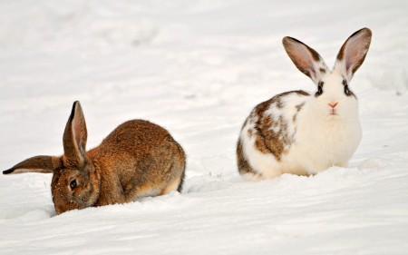 صور ارنب (3)