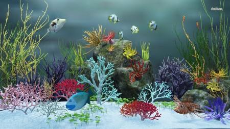 صور الأسماك الزينة (3)