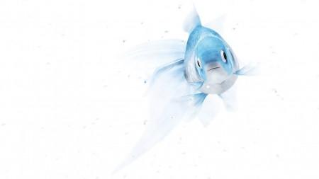 صور الاسماك (4)