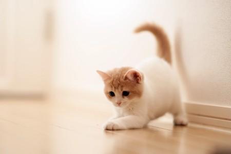 صور القطط (1)