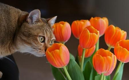 صور القطط (3)
