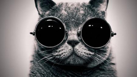 صور القطط (5)