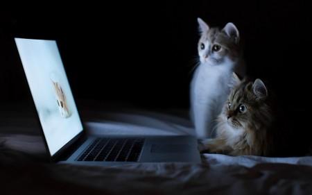 صور القطط (6)