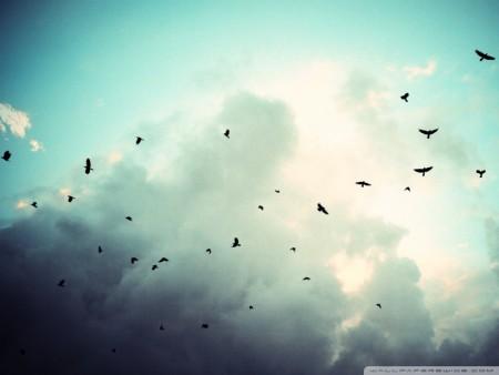 صور طيور جميلة مميزة (2)