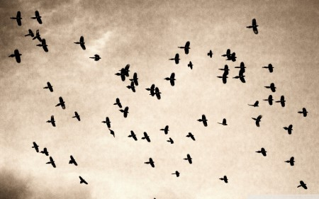 صور طيور (1)