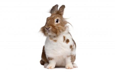 صور عن ارانب (1)