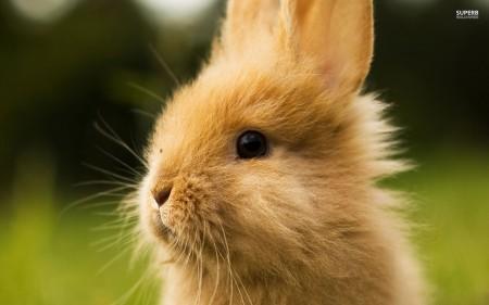 صور عن ارانب (2)