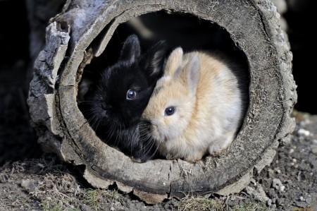 صور عن ارانب (5)