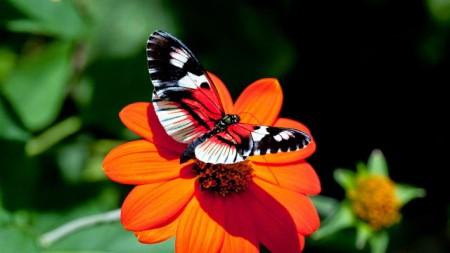 صور فراشات ملونة (7)