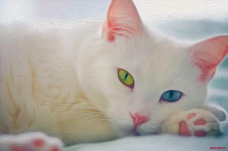 صور قطط بيضاء (1)
