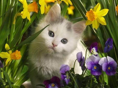 صور قطط جميلة جدا (2)