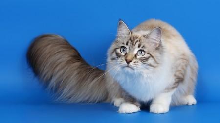 صور قطط جميلة (6)