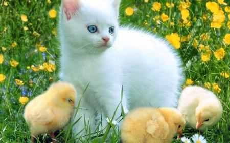 صور قطط جميلة (8)