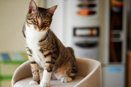 صور قطط جميلة (9)