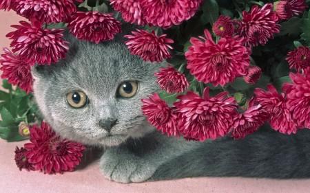صور قطط حلوة (4)