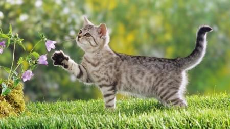 صور قطط حلوين (1)