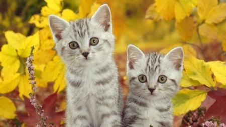 صور قطط حلوين (2)