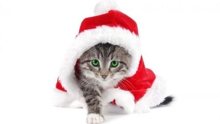 صور قطط حلوين (4)
