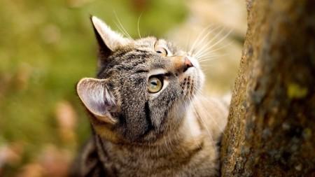 صور قطط حلوين (5)