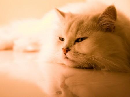 صور قطط روعة (1)
