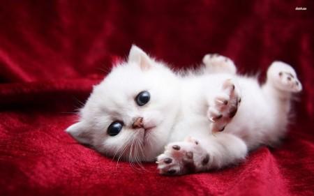 صور قطط صغار (1)