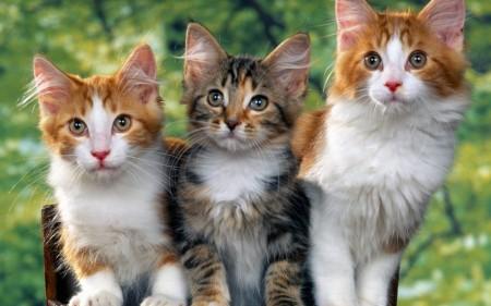 صور قطط صغار (2)