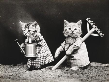 صور قطط صغار (3)