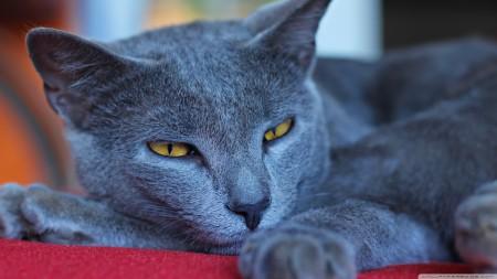 صور قطط صغار (5)