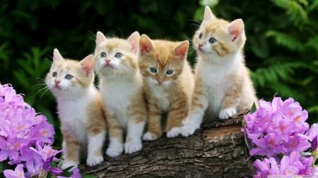 صور قطط صغار (6)
