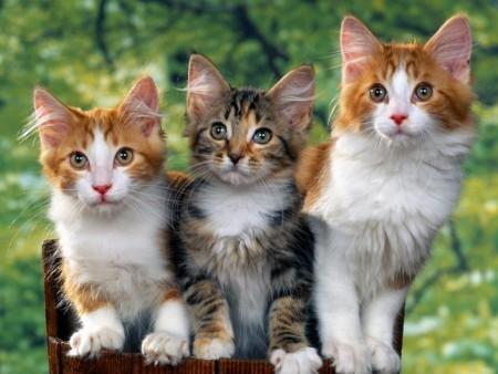 صور قطط صغيرة (5)